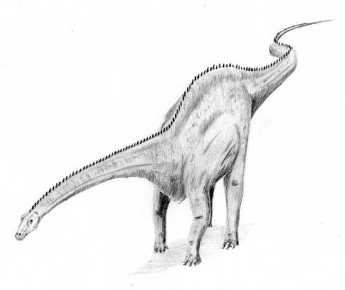 Herbivore dinosaur wiki - Dinosaure diplodocus ...