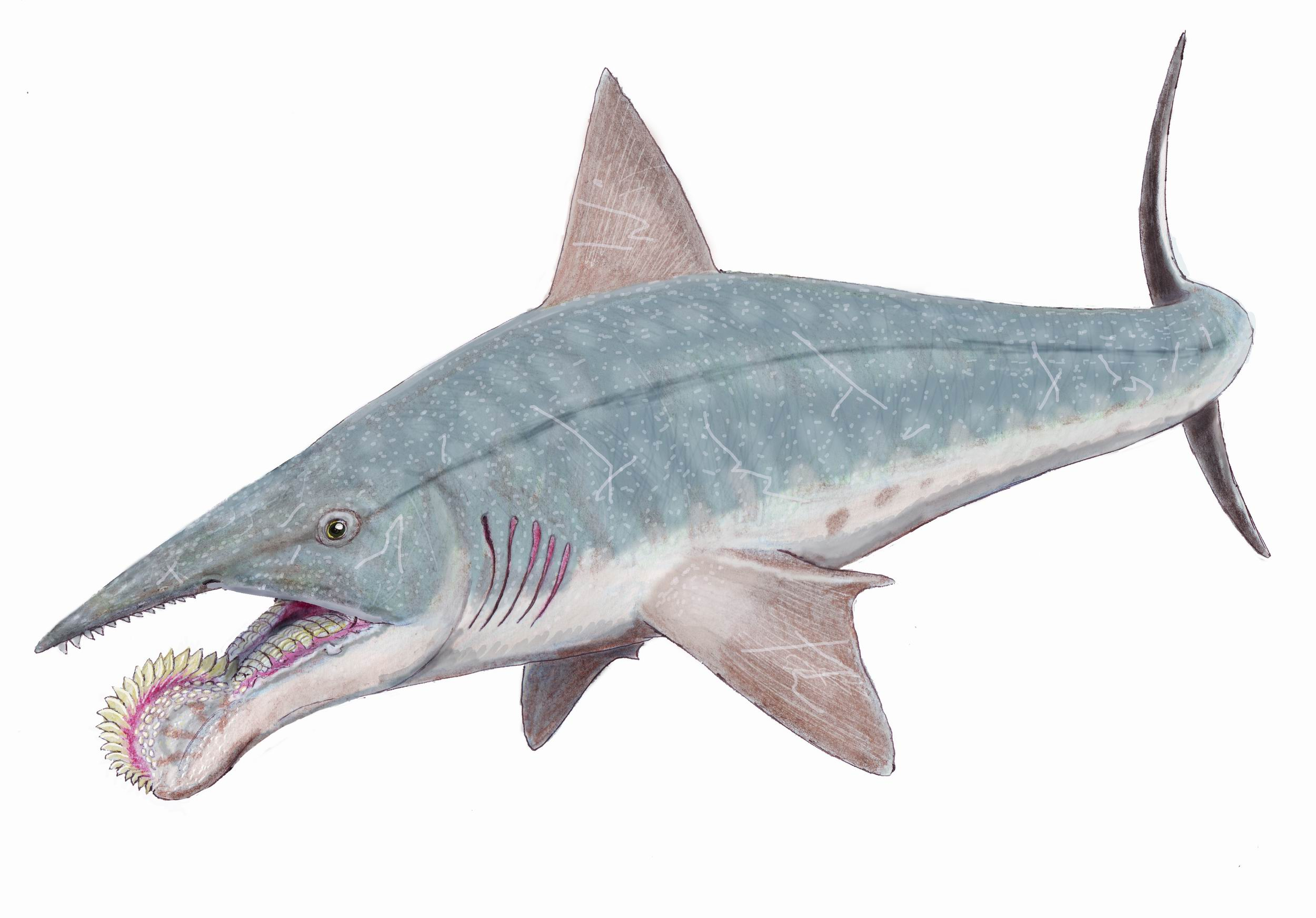http://static3.wikia.nocookie.net/__cb20120118080431/cooldinofacts/images/1/14/Helicoprion.jpg