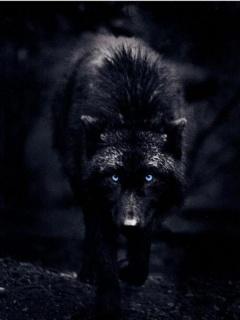 Ochiba's Journey Black-Wolf