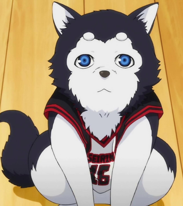 Kuroko Dog Name