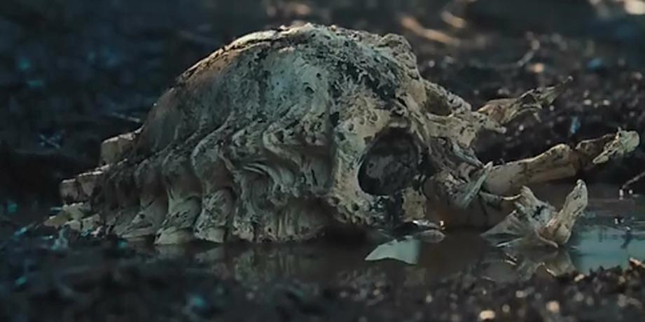 Yautja - Alien Species...