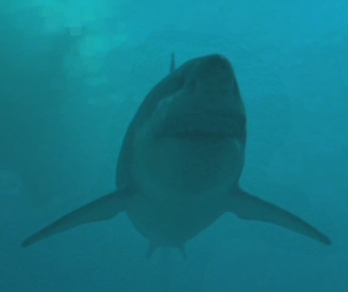megalodon walking with wikis the free walking with